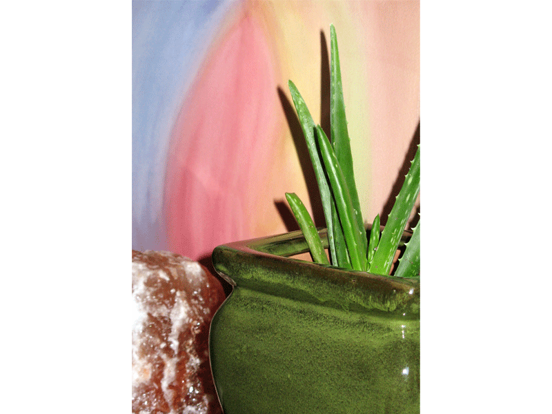 Ouroboros-Wellness-Aloe-Plant-Salt-Lamp-Veil-Painting