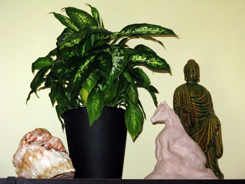 Ouroboros-Wellness-Plant-Buddha-Calcite