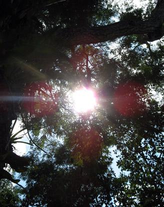 Ouroboros-Wellness-Intuitive-Shamanic-Healing-Sun-Spirit